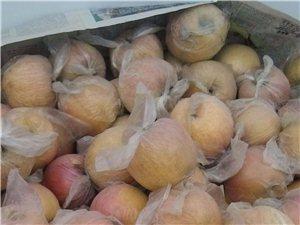 潍坊青州尧王山老孟苹果