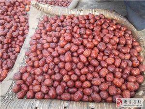 2013年河北省唐縣楊高和楊老漢大棗紅火上市