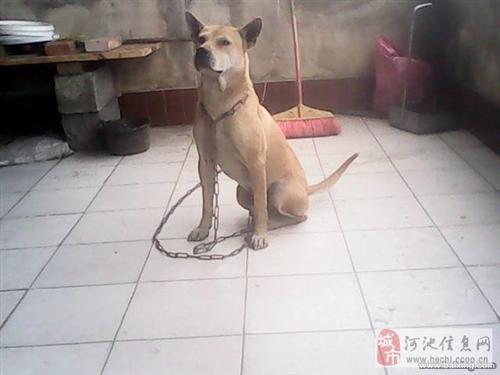 土猎狗广西