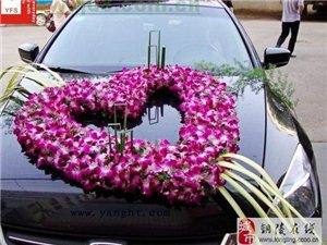 銅陵專業的婚慶車隊