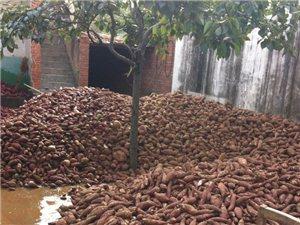 农家自产-纯红薯粉条,好吃不贵