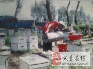 出售合作社產純蜂蜜,新到精美包裝禮品盒