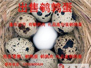 出售鵪鶉蛋~自己養殖