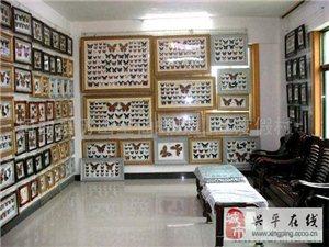 楊凌尚城昆蟲蝴蝶自然館:批發、零售蝴蝶工藝品