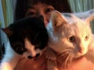 因为家里有一个大猫了所以送人一只猫