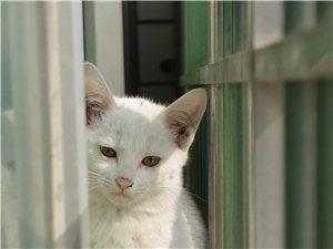 可爱猫咪免费领养