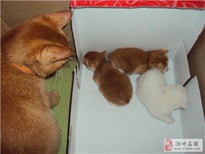 送3只满月的小猫咪