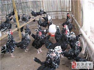 楊梓澤安珍禽生態養殖場
