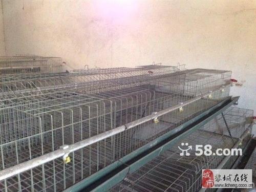 雞籠,九成新,轉讓,養殖專用