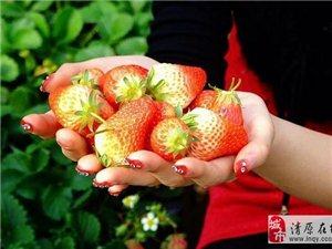 清原草莓采摘园