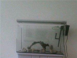 使用半年的鱼缸便宜卖了