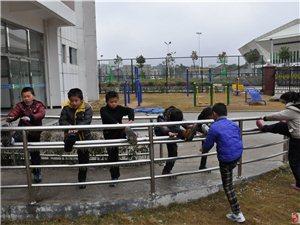 雅思培訓班招生了、網球、武術、散打、素質拓展等等。