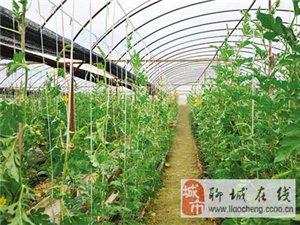 新旺兴农种植大棚,温室大棚