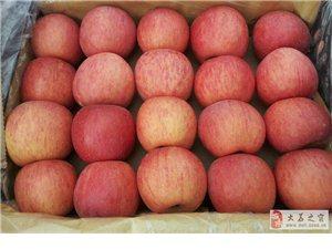 紅富士蘋果出庫批發價格陜西冷庫紅富士蘋果批發行情