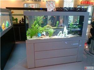 大禹水族長年免換水的生態魚缸