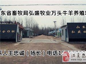武漢肉牛養殖場