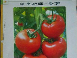 化肥種苗菜籽農膜