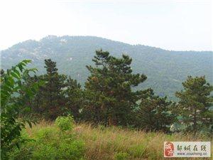 山东省水利风景区对外承包水库、果园
