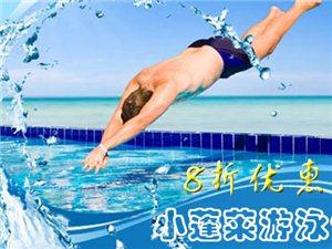 [小蓬莱游泳馆]8折优惠券