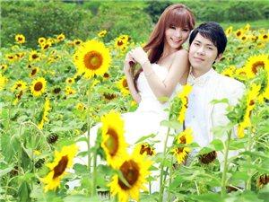 向日葵爱恋