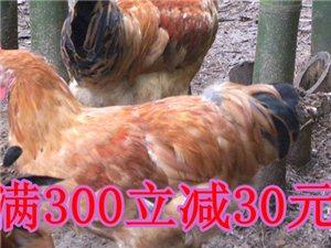 [大邑亚态土鸡养殖中心]满300减30元优惠券
