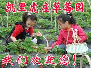凯里虎庄草莓园