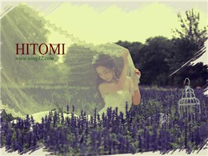 薰衣草的浪漫香 淡紫色婚�美不