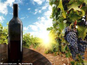 法国梧桐堡干红葡萄酒