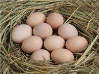 石林生态土鸡蛋