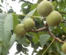 简阳航天苗木种植专业合作社